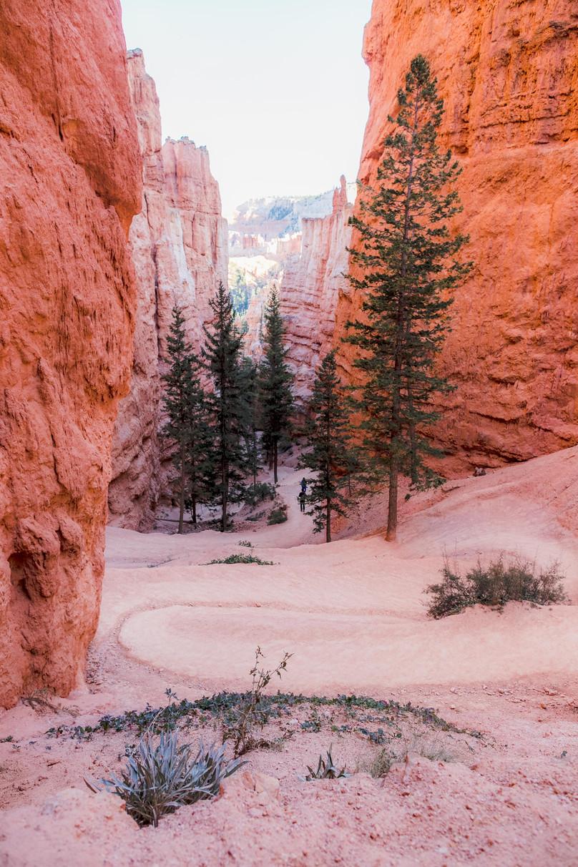 Hiking the Navajo Loop Trail - Bryce Canyon National Park
