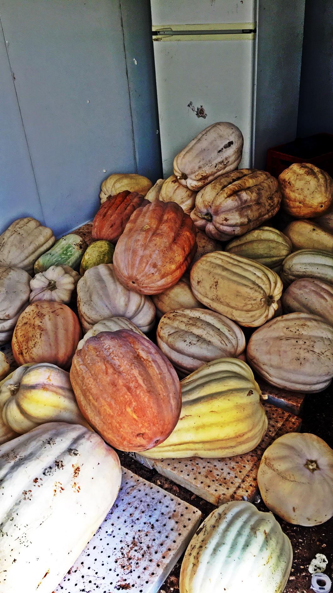 2017 pumpkins