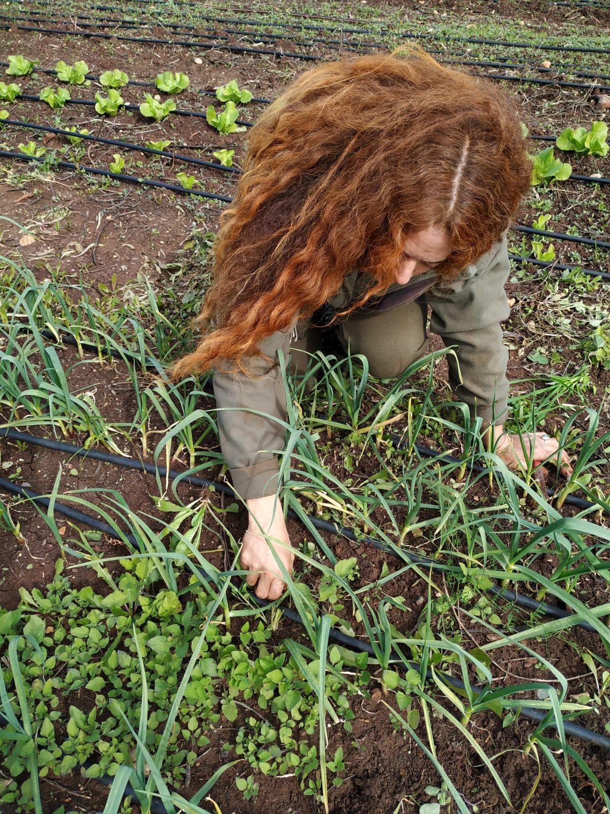 Orna weeding