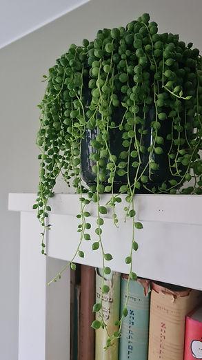 erwtenplant van Eva Noels
