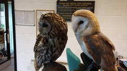 Resident-Owls1