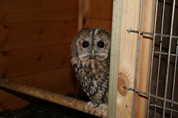 Resident-Owls5