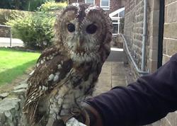 Resident-Owls4