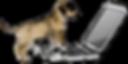 puppy consulation boston