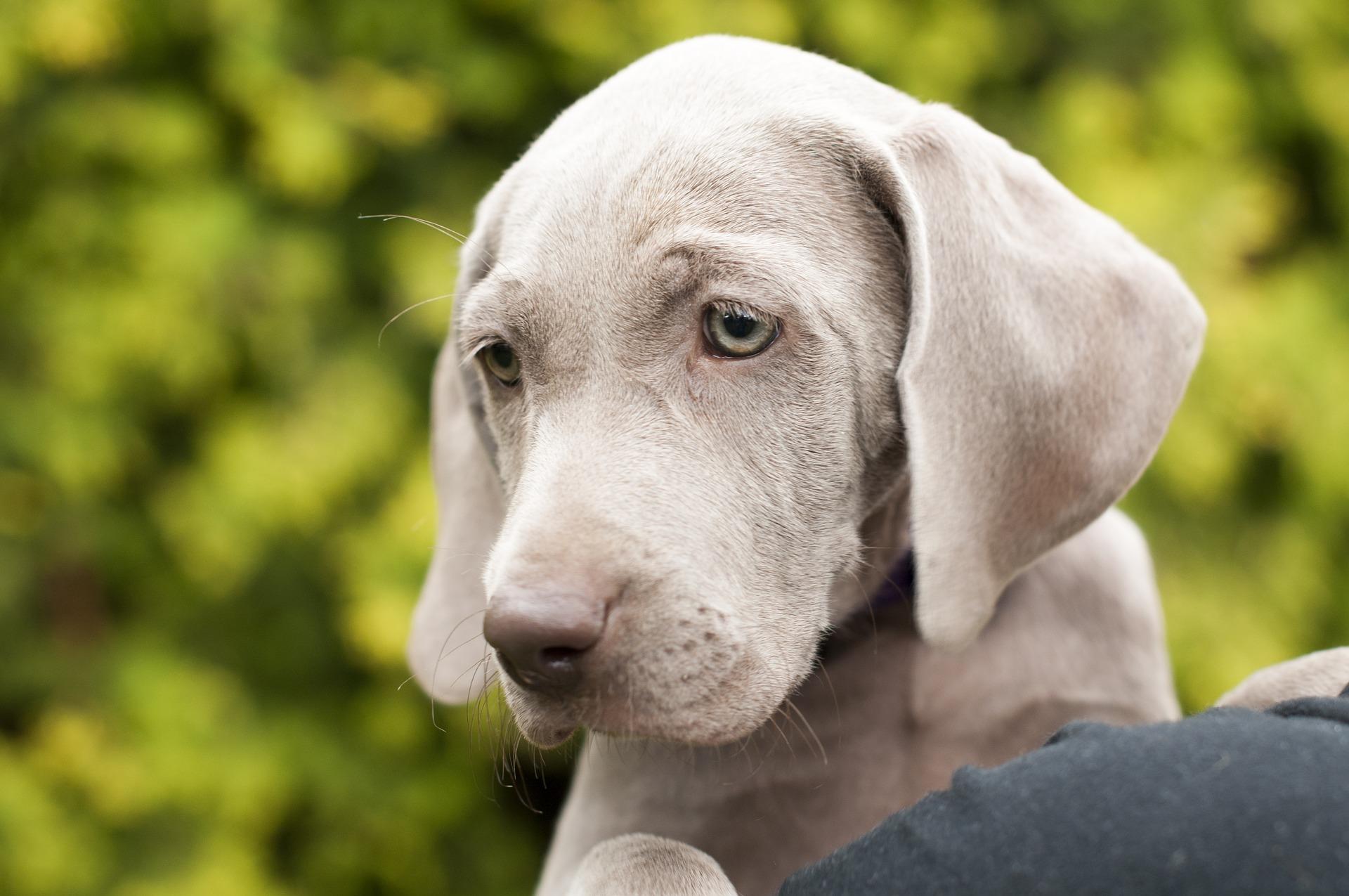 dog-1615274_1920
