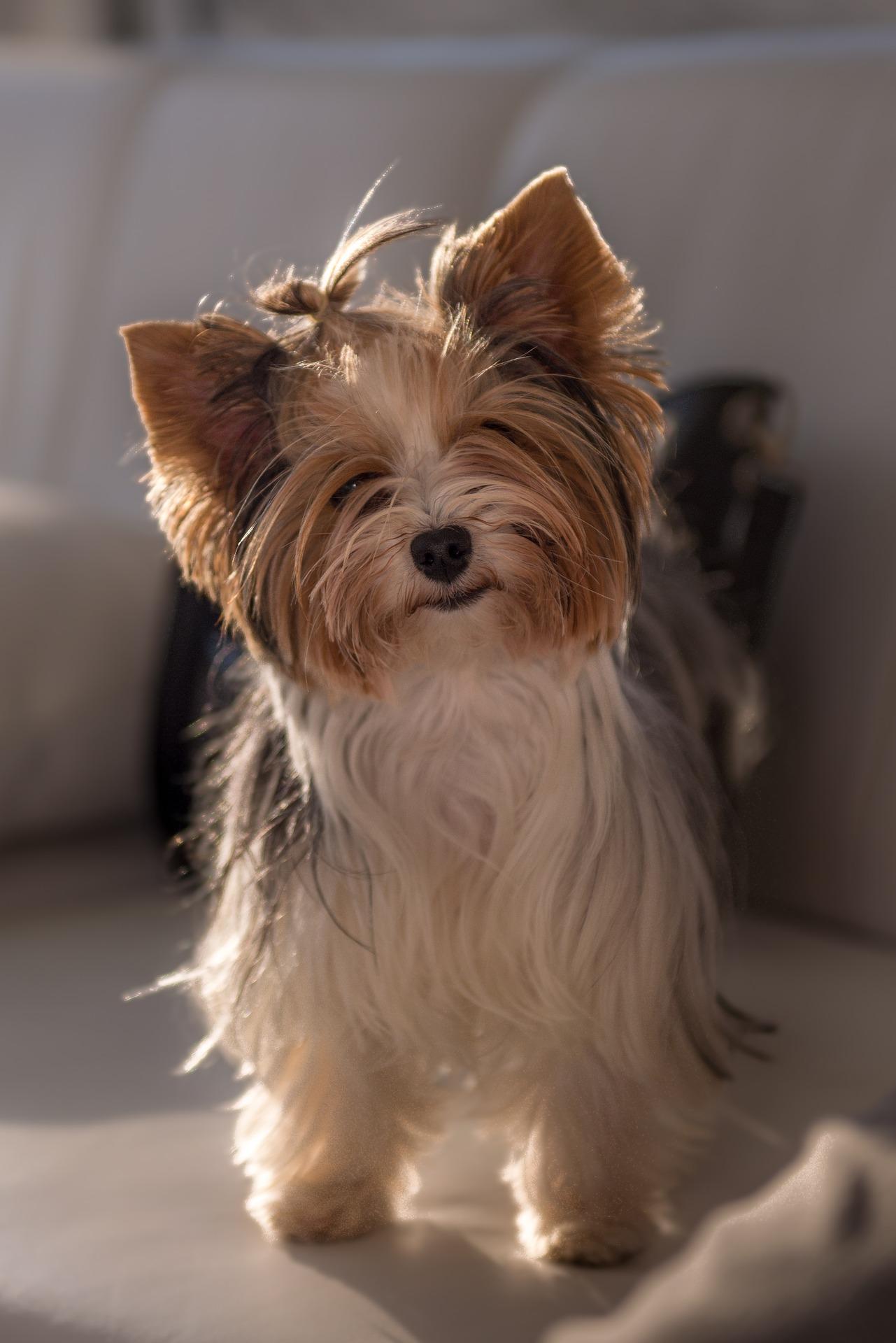dog-1825745_1920