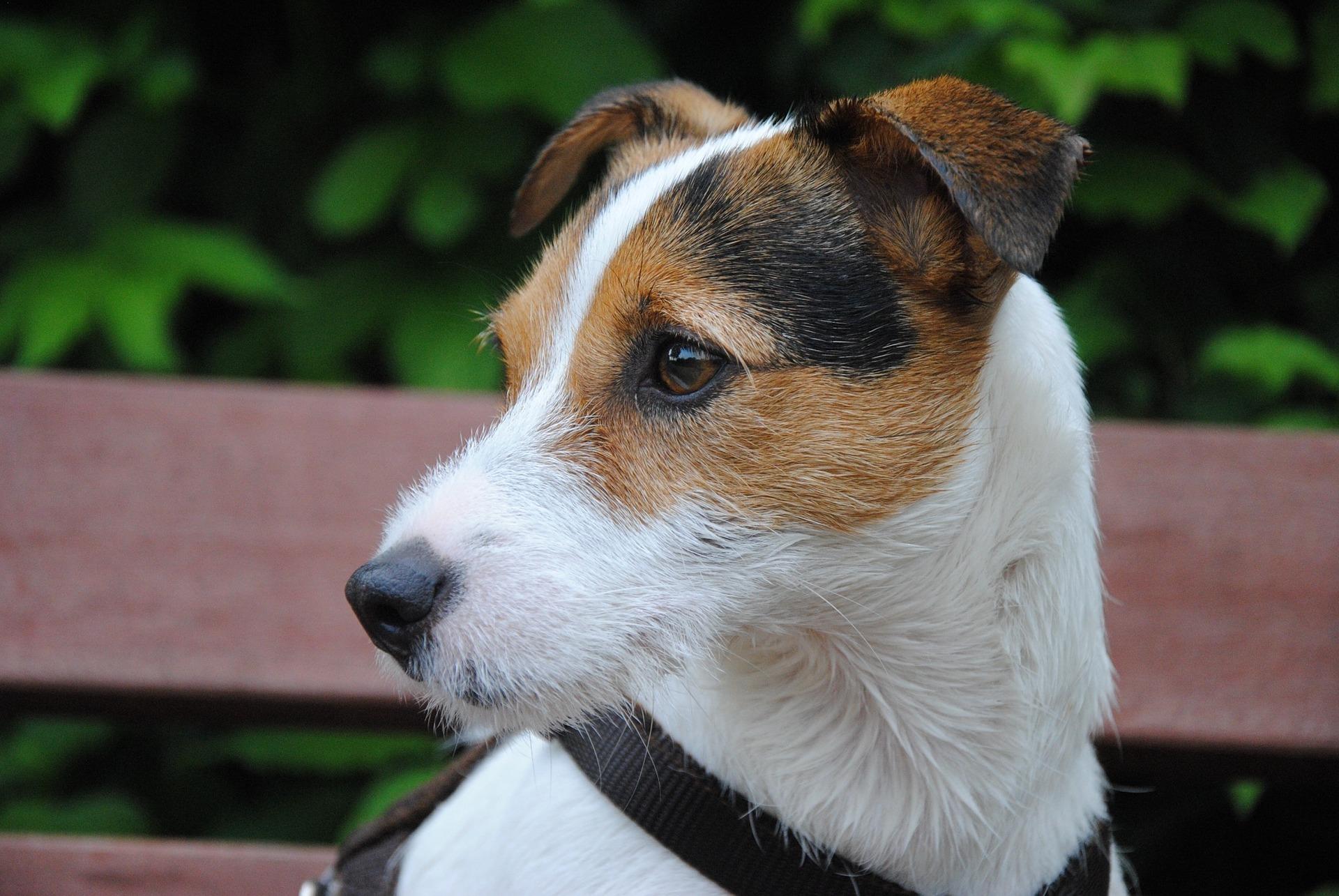 dog-2097102_1920