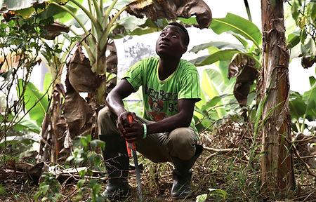 Cocoa Farming 1.jpg