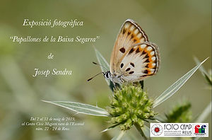 papallones.jpg