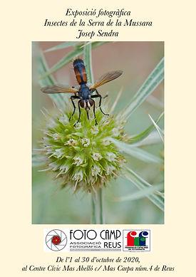 insectes_13326.JPG