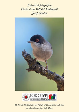 108 - Ocells de la Vall del Maldanell -