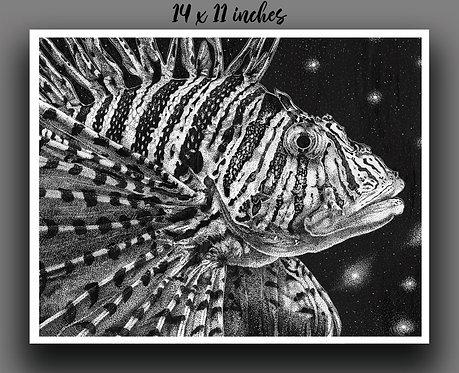 """Lionfish"" Print"