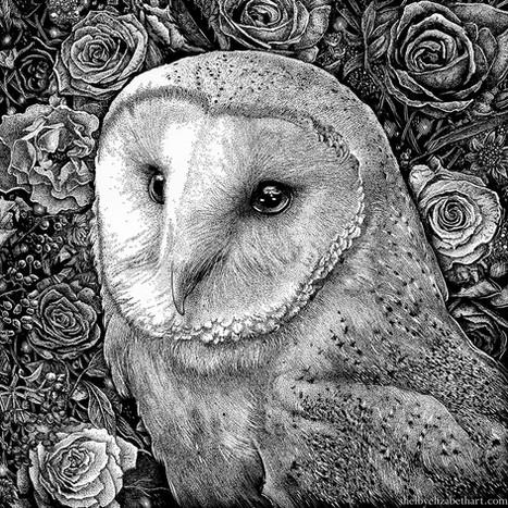 Barn Owl in Flowers