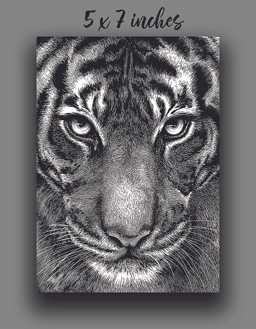 'Tiger Portrait' Signed Print