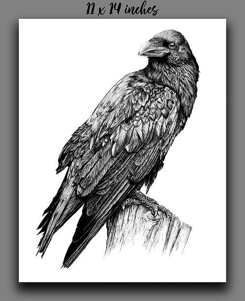 """Raven"" Signed Print"