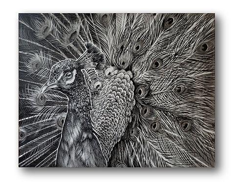 """'Peacock' Original Drawing, 14"""" x 11"""""""