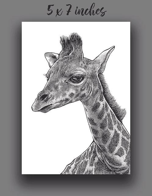 'Giraffe' Signed Print