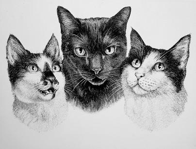 Katherine's Kitties