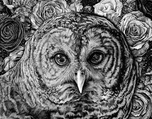 Hoot Owl