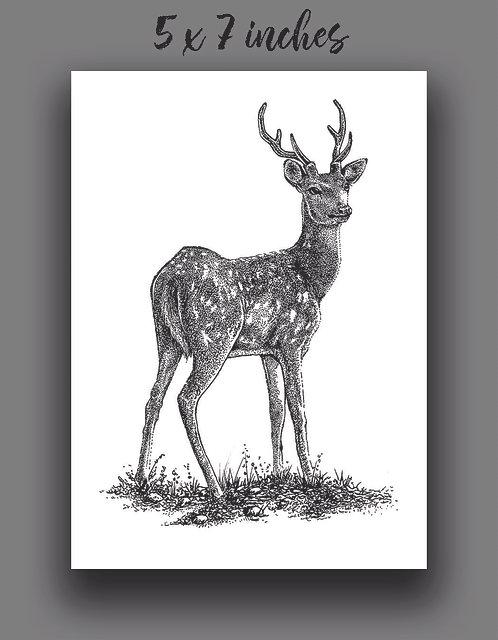 'Deer' Signed Print