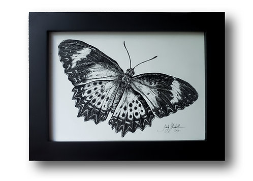 "'Leopard Lacewing' Original Drawing, 7"" x 5"""