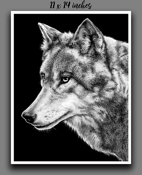 """Grey Wolf"" Signed Print"