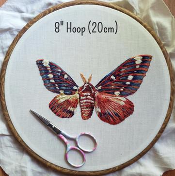'Asymmetrical Moth'