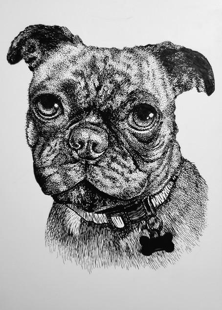Doug Portrait