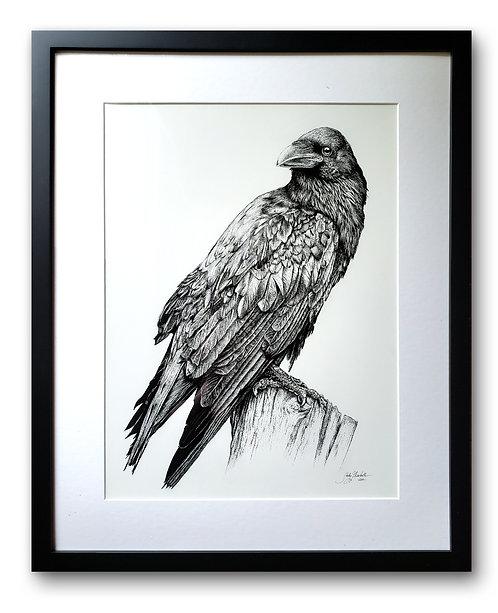 """'Raven' Original Drawing, 12"""" x 16"""""""