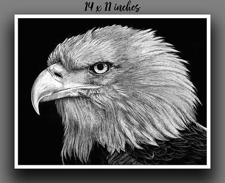 """Bald Eagle"" Signed Print"