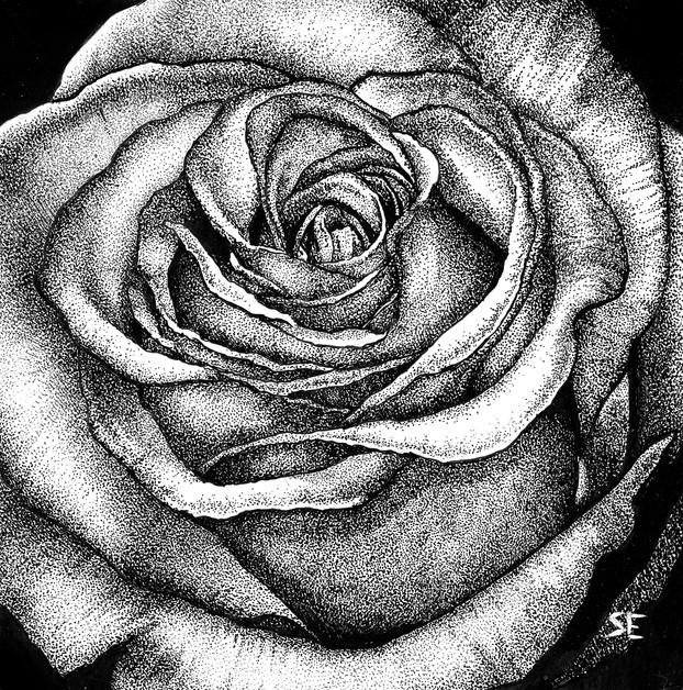 Rose Study 2