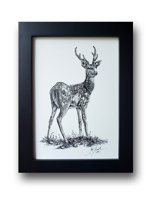 "'Deer' Original Drawing, 5"" x 7"""