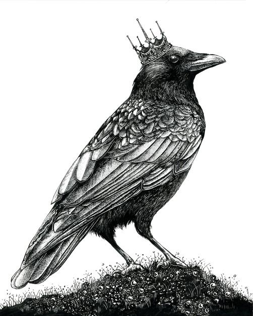 'King Crow'