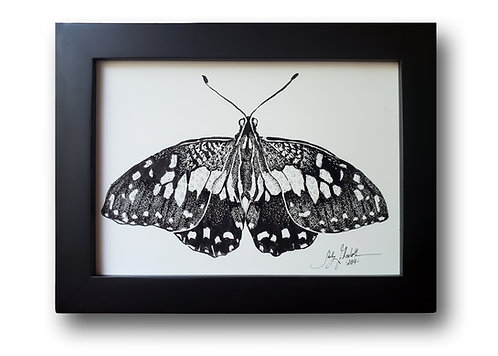 "'Christmas Swallowtail' Original Drawing, 5"" x 7"""