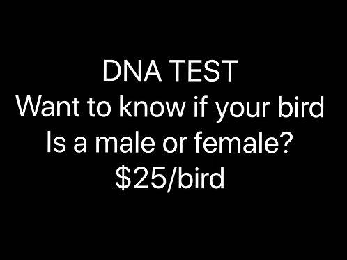 Bird DNA Test