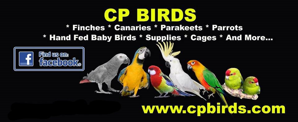BABY & HAND FED PARROTS | CP Birds Exotic Birds for Sale