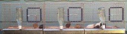 Button Quail Breeding Cages