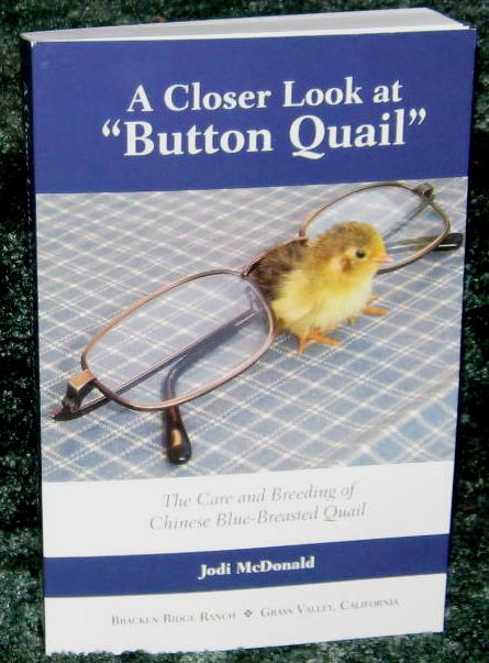 A closer look at Button Quail by Jodi McDonald