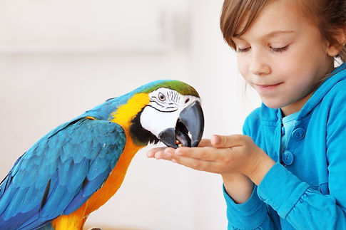 Child touching friendly parrot