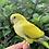 Thumbnail: Quaker Yellow Crossover baby