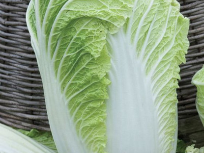 Chinese Cabbage in Oyster Sauce