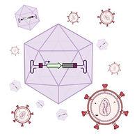 Viruses.jpg