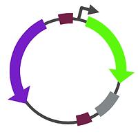 Plasmids Depositary