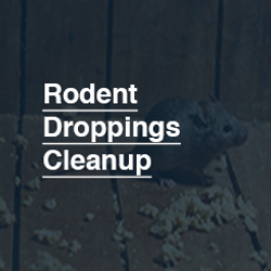 245X245Rodent_Droppings_Cleanup.png