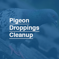 245X245_Pigeon_Droppings_Cleanup.png