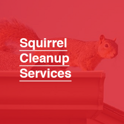245X245_Squirrel_Cleanup.png