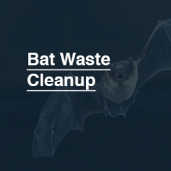 245X245_Bat_Waste_Cleanup.png