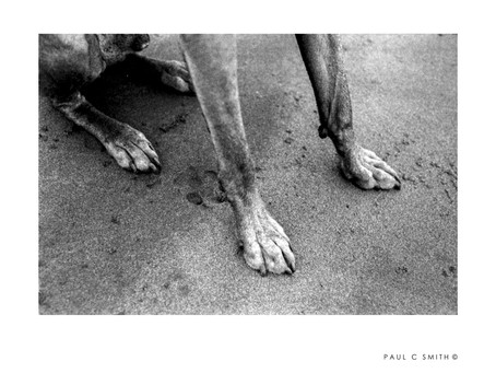 Leica M6 | A Roll of TRI-X | Sensitivity A Finger And Two Legs