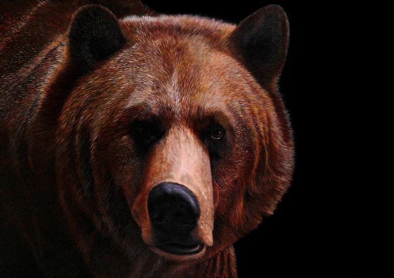 """Bear - 30"""" x 42"""""""