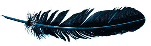 Feather-PNG-Pic-1.png
